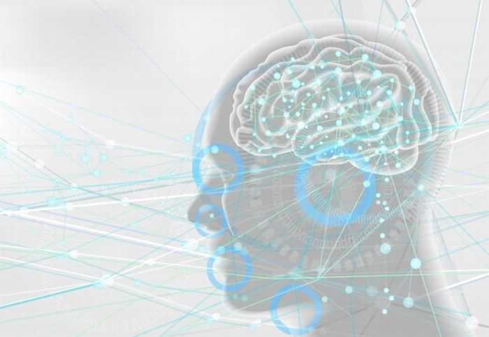 レプチン抵抗性   脳の食欲センサーが狂う原因と改善方法